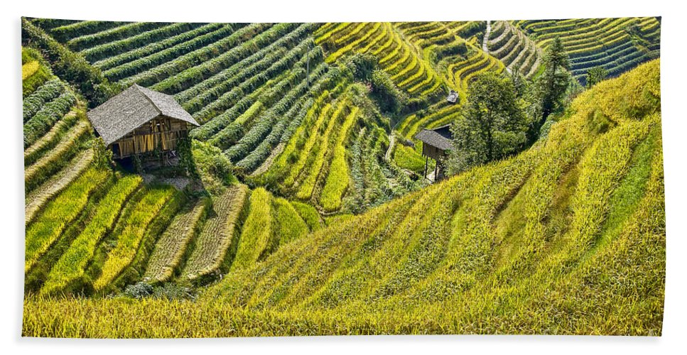 Rice Fields Bath Sheet featuring the photograph Rice Fields Terraces by Delphimages Photo Creations
