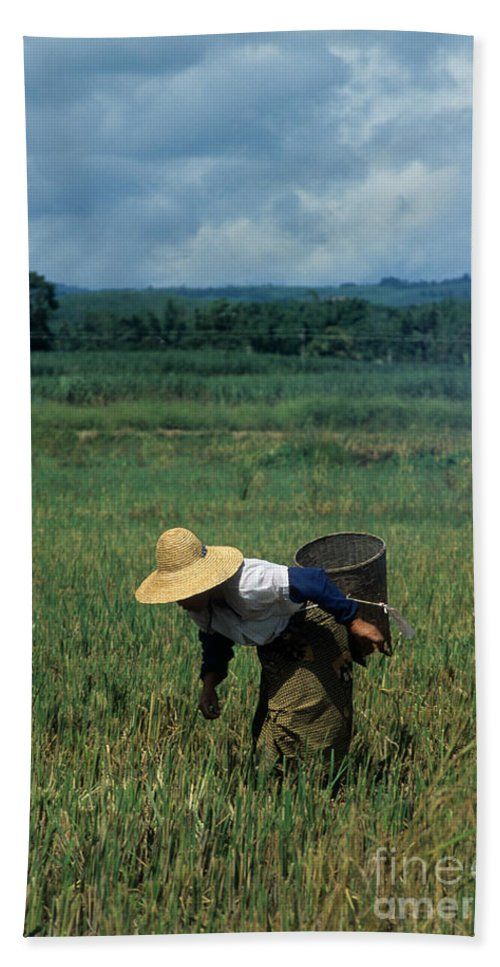 China Hand Towel featuring the photograph Rice Harvest In Southern China by James Brunker