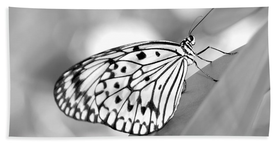 Amazing Bath Sheet featuring the photograph Rice Paper Butterfly Resting For A Second by Sabrina L Ryan