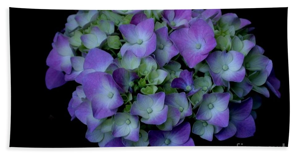 Floral Bath Sheet featuring the photograph Rich Hydrangea by Living Color Photography Lorraine Lynch