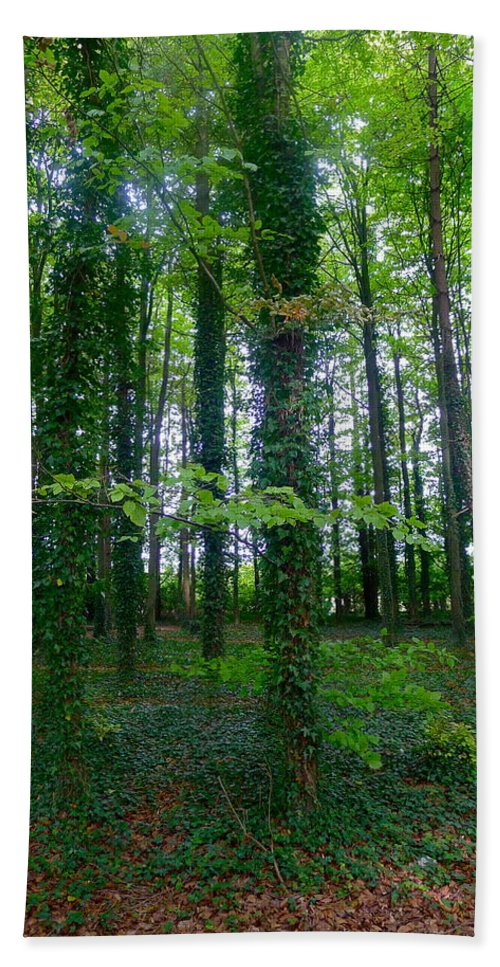 Tree Bath Sheet featuring the photograph Ridgeway Trees by Denise Mazzocco