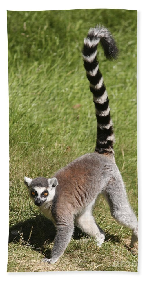 Lemur Hand Towel featuring the photograph Ring-tailed Lemur by Liz Leyden