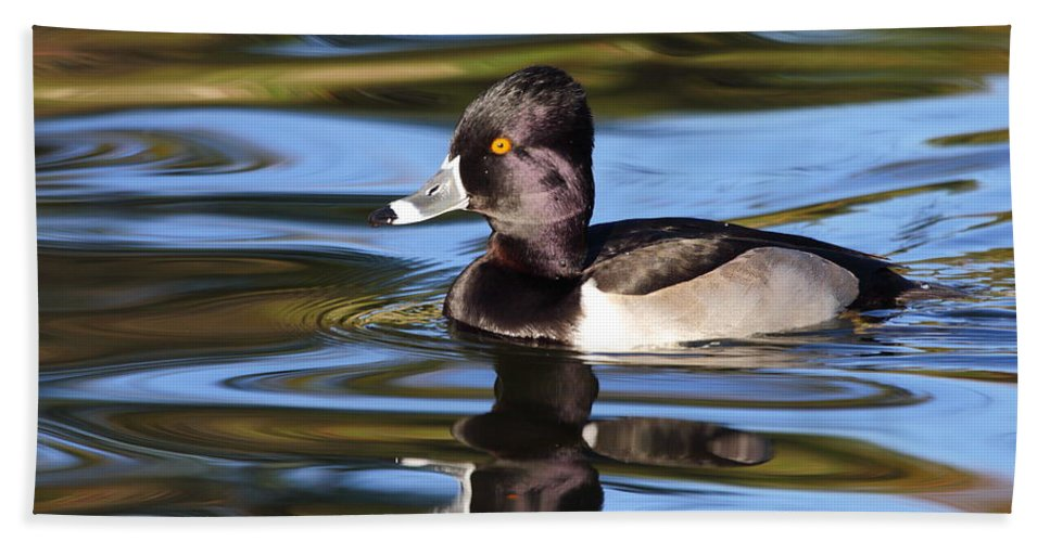 Ring-necked Duck Bath Towel featuring the photograph Rings around Ring-necked Duck by Andrew McInnes