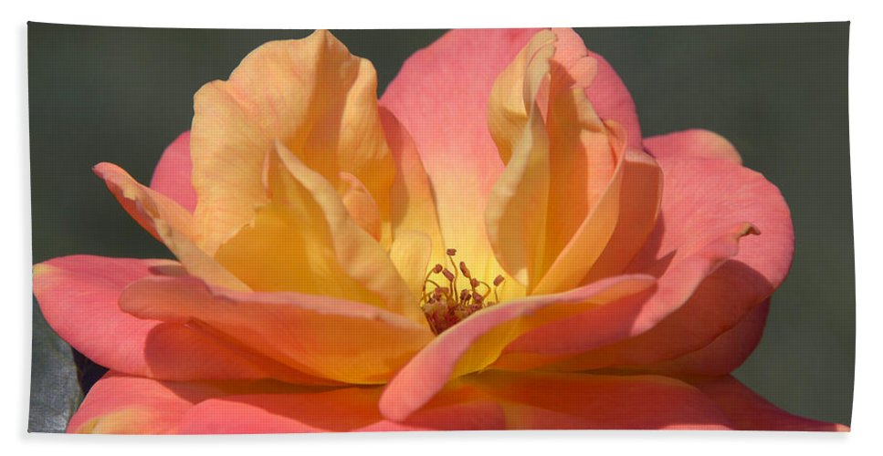 Rose Hand Towel featuring the photograph Rio Samba by Terri Winkler