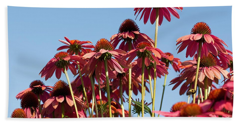 Coneflower Hand Towel featuring the photograph Rise Above All by Barbara McMahon