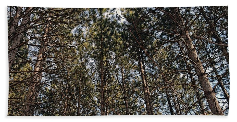Pine Trees Hand Towel featuring the photograph Rise Up by Joseph Yarbrough