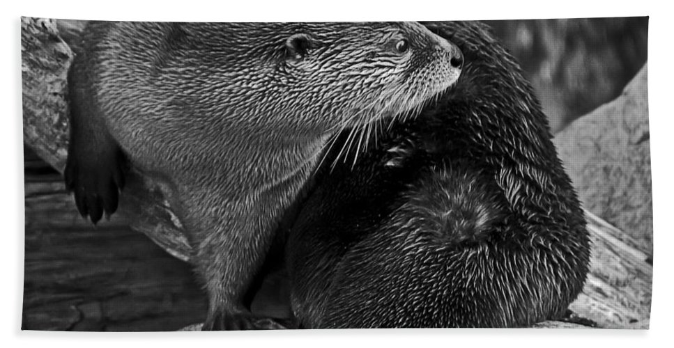 Kate Brown Bath Sheet featuring the photograph River Otter In Black And White by Kate Brown