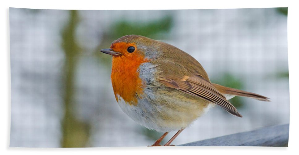 Robin Hand Towel featuring the photograph Robin 3 by Scott Carruthers