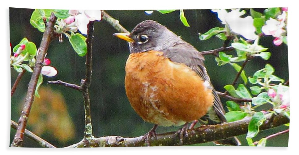 Robin Hand Towel featuring the photograph Robin In Apple Tree by MTBobbins Photography