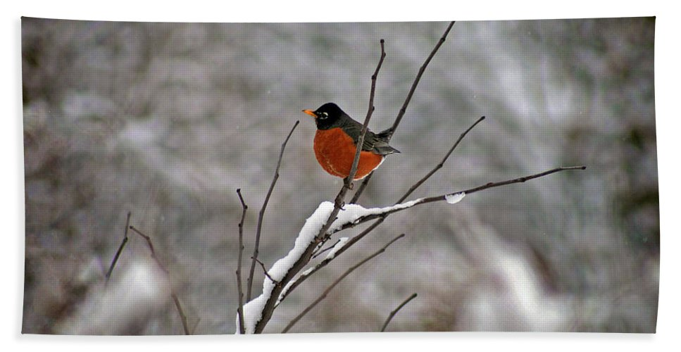 Robin Bath Sheet featuring the photograph Robin In Winter by Karen Adams