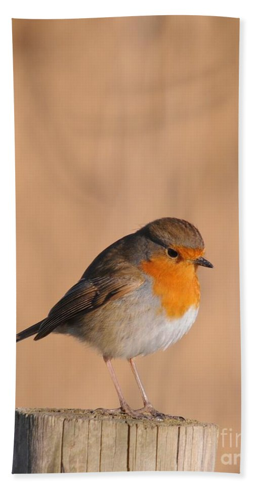 Robin Bath Sheet featuring the photograph Robin by Jenny Potter