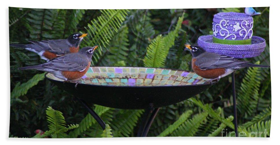 Robin Bath Sheet featuring the photograph Robins In Bird Bath by Robin Maria Pedrero