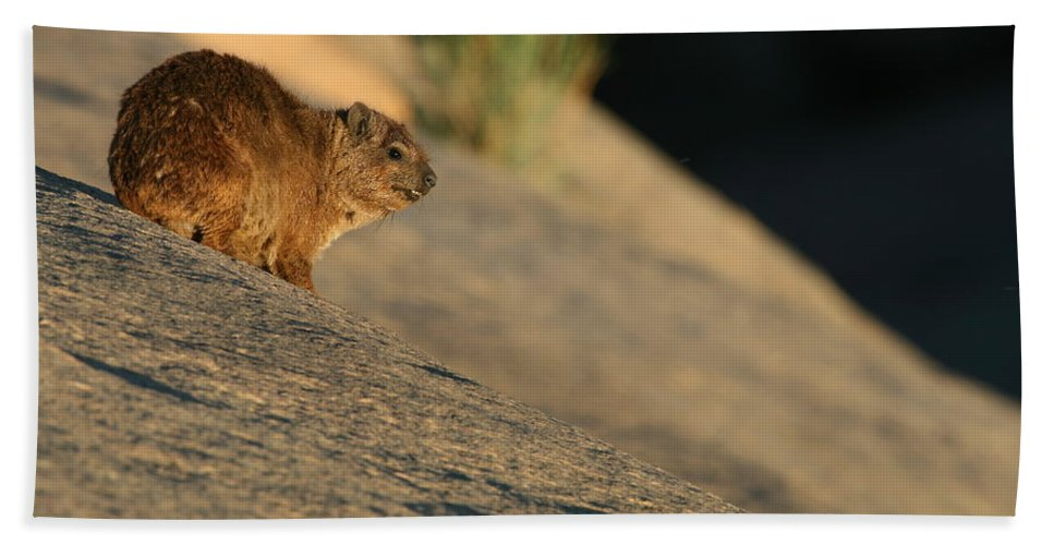 Hyrax Hand Towel featuring the photograph Rock Hyrax by Bruce J Robinson