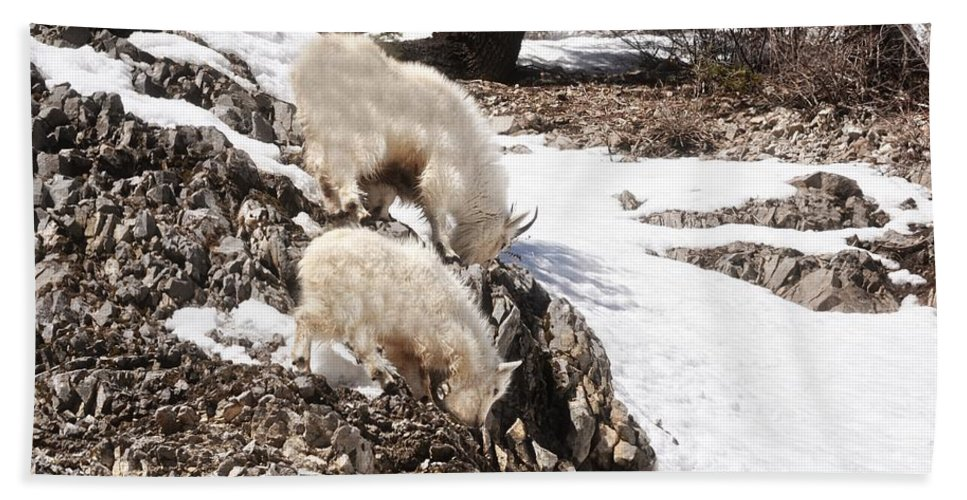 Rocky Mountain Goat Hand Towel featuring the photograph Rocky Mountain Goats - Mother And Baby by Image Takers Photography LLC - Carol Haddon