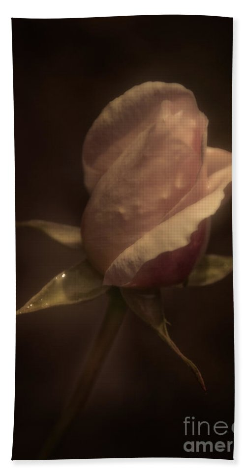 Rose Hand Towel featuring the photograph Romance Of A Rose by Venetta Archer