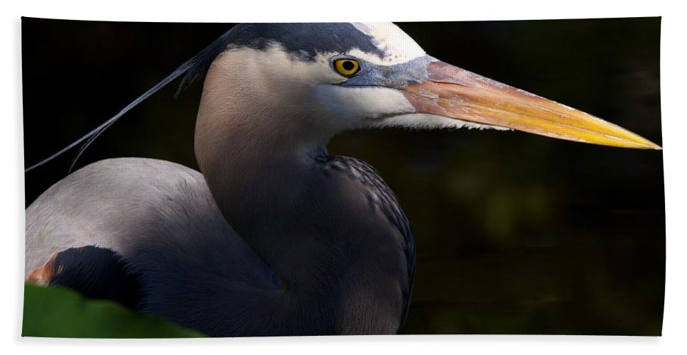 Wildbird Rookery Hand Towel featuring the photograph Rookery 3 by David Beebe