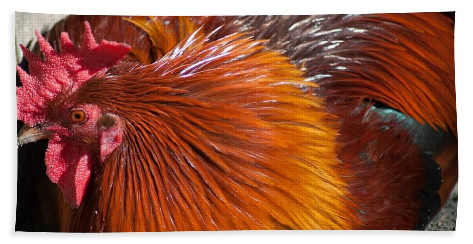 Optical Playground By Mp Ray Hand Towel featuring the photograph Rooster Colors by Optical Playground By MP Ray