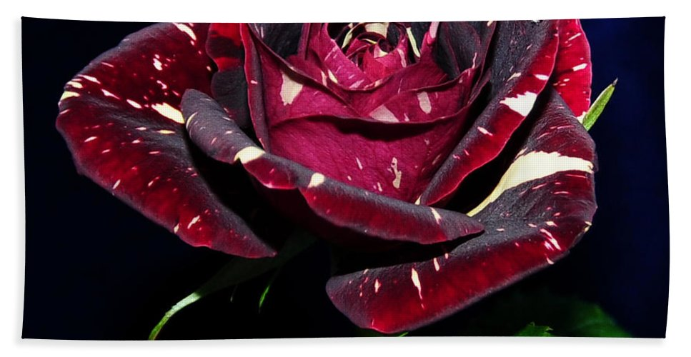 Roses Bath Sheet featuring the photograph Rose 5 by Terri Winkler
