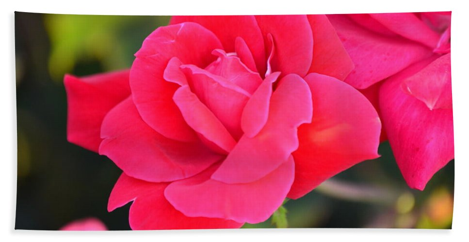 Nature Hand Towel featuring the photograph Rose Bush by Kim Stafford