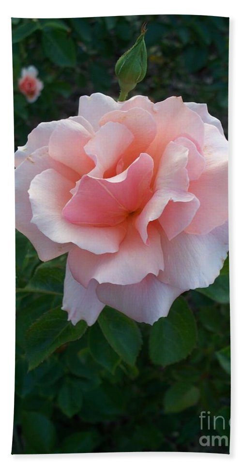 Pink Hand Towel featuring the photograph Rose by Eric Schiabor