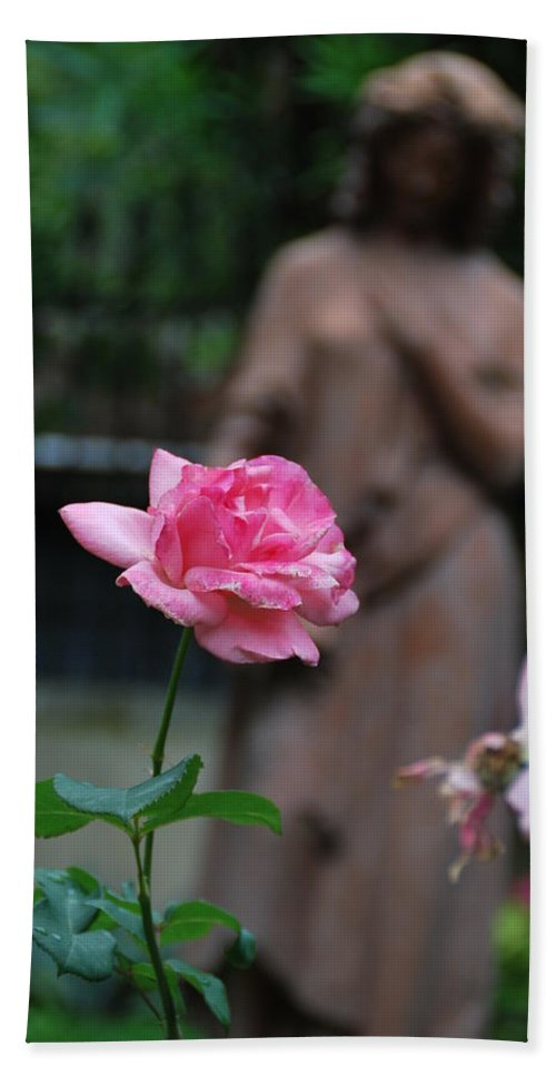 Rose Hand Towel featuring the photograph Rose Garden 2 by Richard Booth