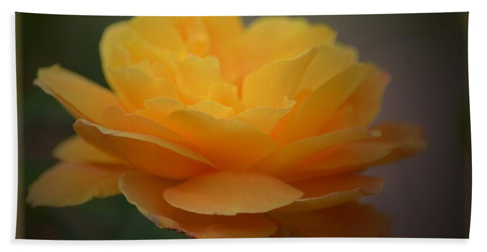 Rose Glow Bath Sheet featuring the photograph Rose Glow by Maria Urso