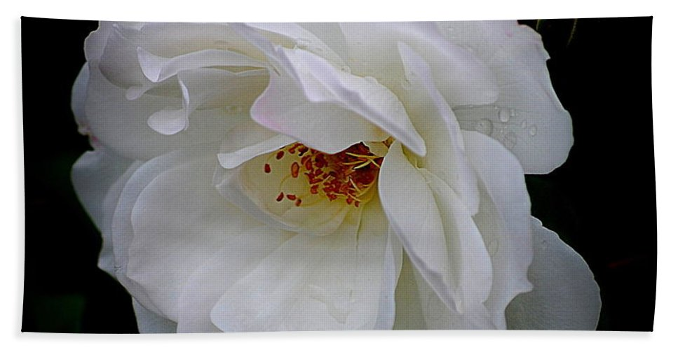 Rose Hand Towel featuring the photograph Rose Perfection by Kathy Sampson