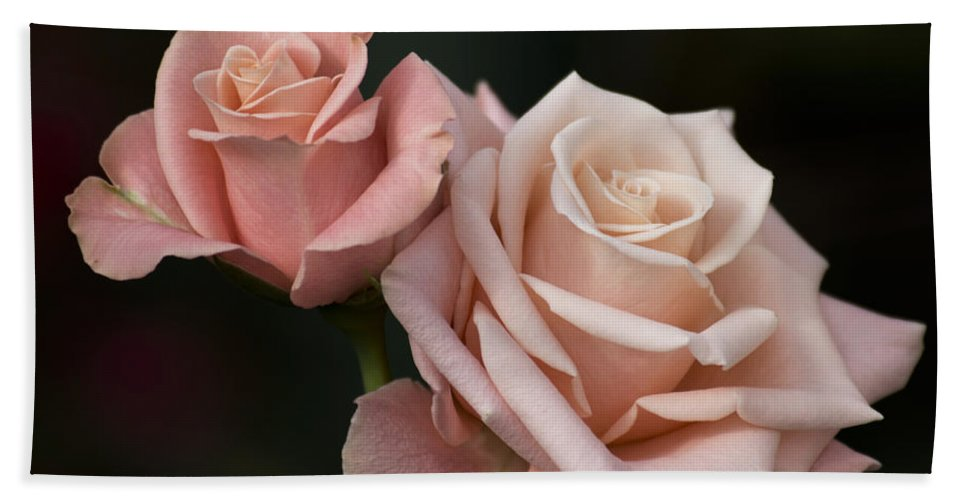 Peach Rose Hand Towel featuring the photograph Rose Tombola 4 Of 4 by Terri Winkler