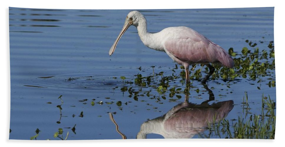 Reflection Hand Towel featuring the photograph Roseate Spoonbill Hunting by Brian Kamprath