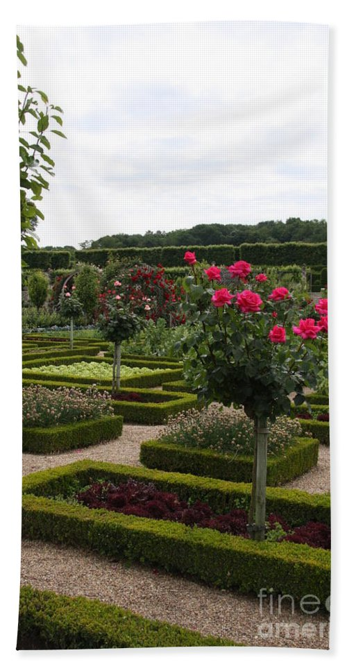 Roses Bath Sheet featuring the photograph Roses And Cabbage - Chateau Villandry by Christiane Schulze Art And Photography