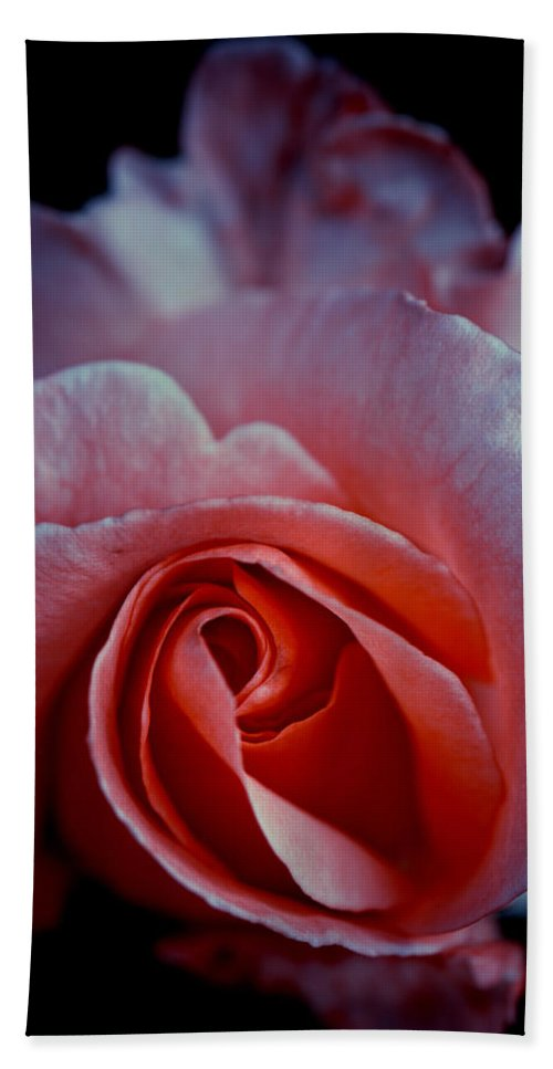 Rose Hand Towel featuring the photograph Rosali by Steffen Gierok