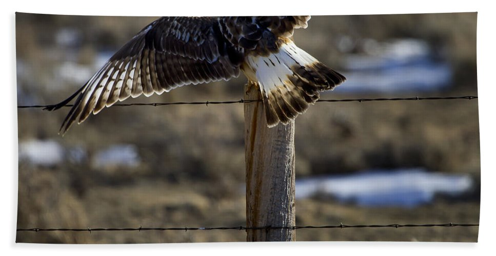 Hawk Hand Towel featuring the photograph Rough-legged Hawk  #1865 by J L Woody Wooden