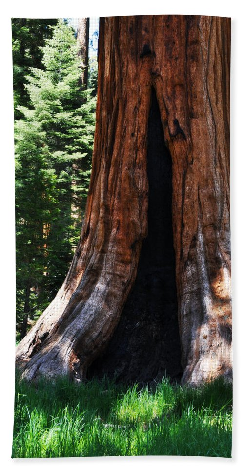 Sequoia National Park Bath Sheet featuring the photograph Round Meadow Giant Sequoia Portrait by Kyle Hanson