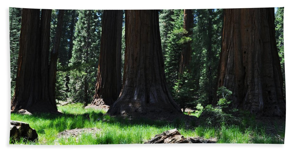 Sequoia National Park Hand Towel featuring the photograph Round Meadow Sequoia Family by Kyle Hanson