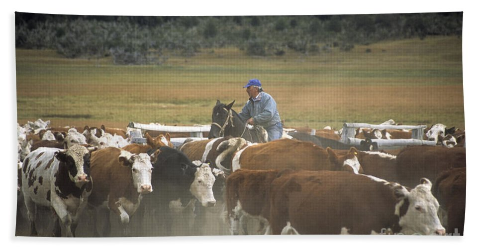 Cowboy Bath Sheet featuring the photograph Cattle Round Up Patagonia by James Brunker