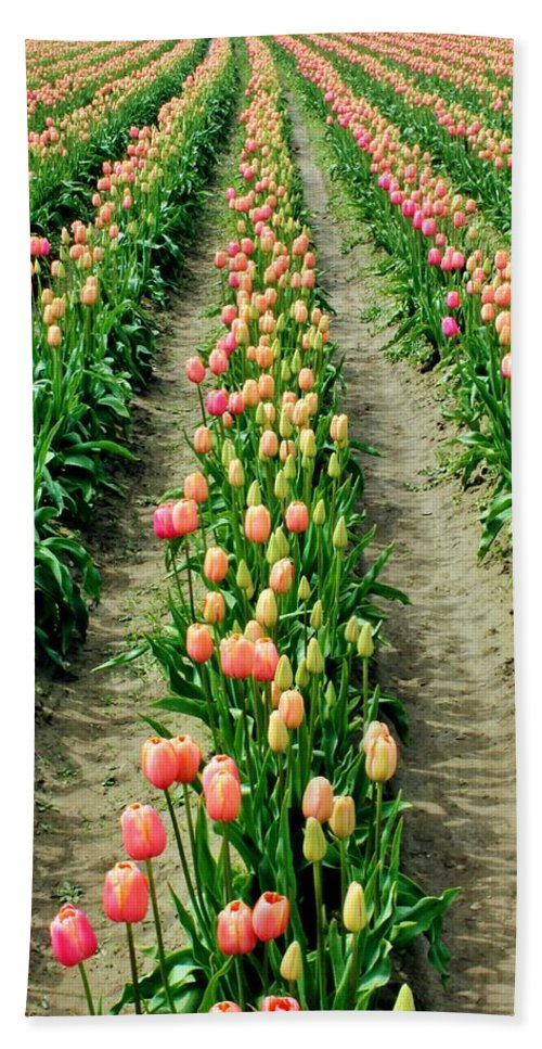 Tulips Hand Towel featuring the photograph Rows Of Pink by Benjamin Yeager