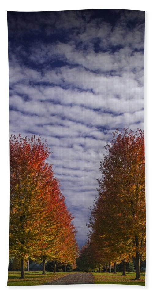 Art Bath Sheet featuring the photograph Rows Of Red Autumn Trees With Cirus Clouds by Randall Nyhof