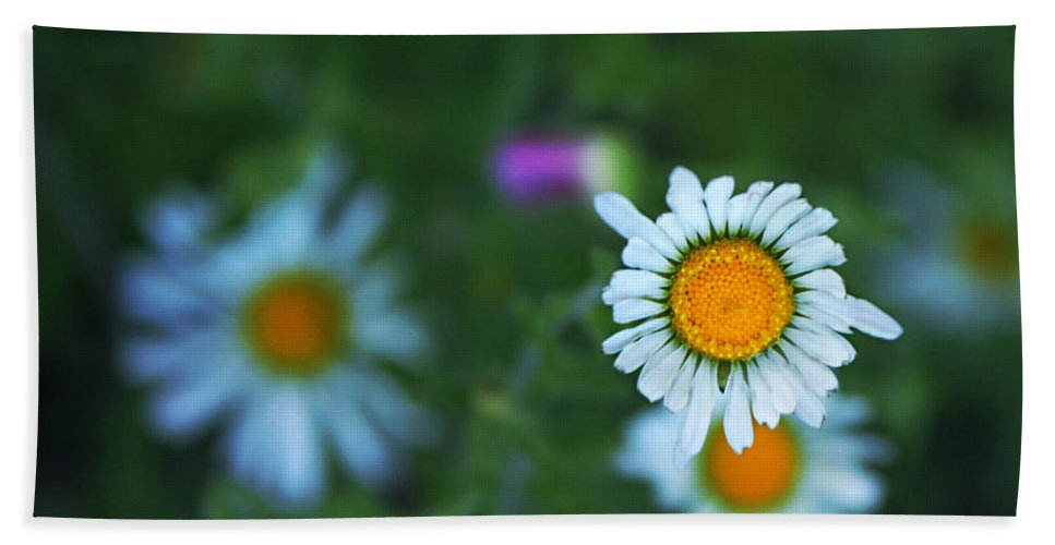 Blackfoot Daisies Hand Towel featuring the photograph Roxy by Trish Mistric