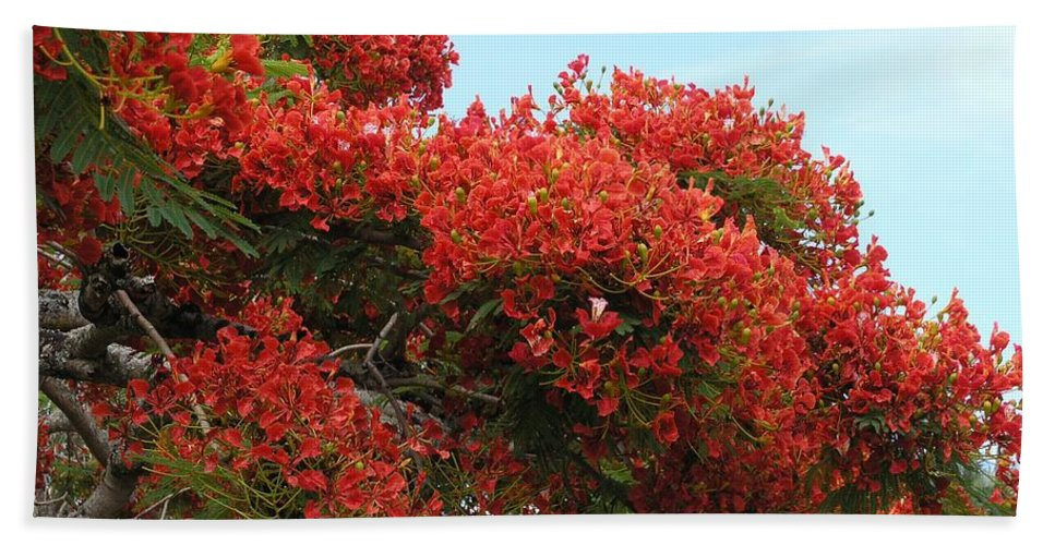 Trees Bath Towel featuring the photograph Royal Poinciana Branch by Mary Deal