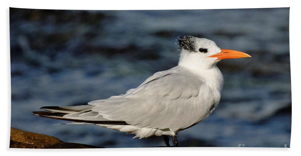 Nature Hand Towel featuring the photograph Royal Tern by Anthony Mercieca