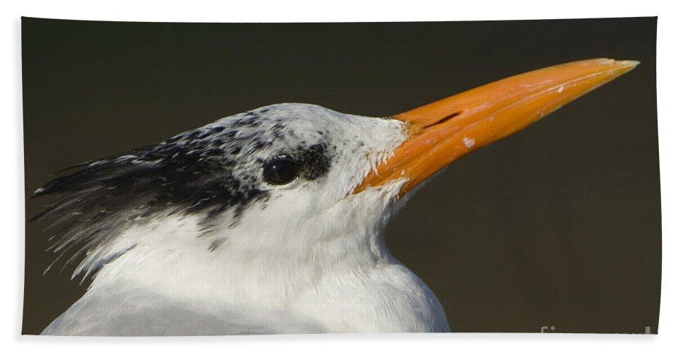 Nature Bath Sheet featuring the photograph Royal Tern by John Shaw