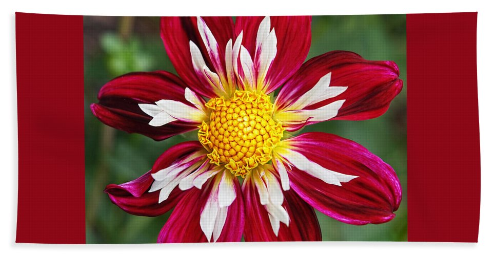 Red Flower Hand Towel featuring the photograph Ruby Glow by Gill Billington