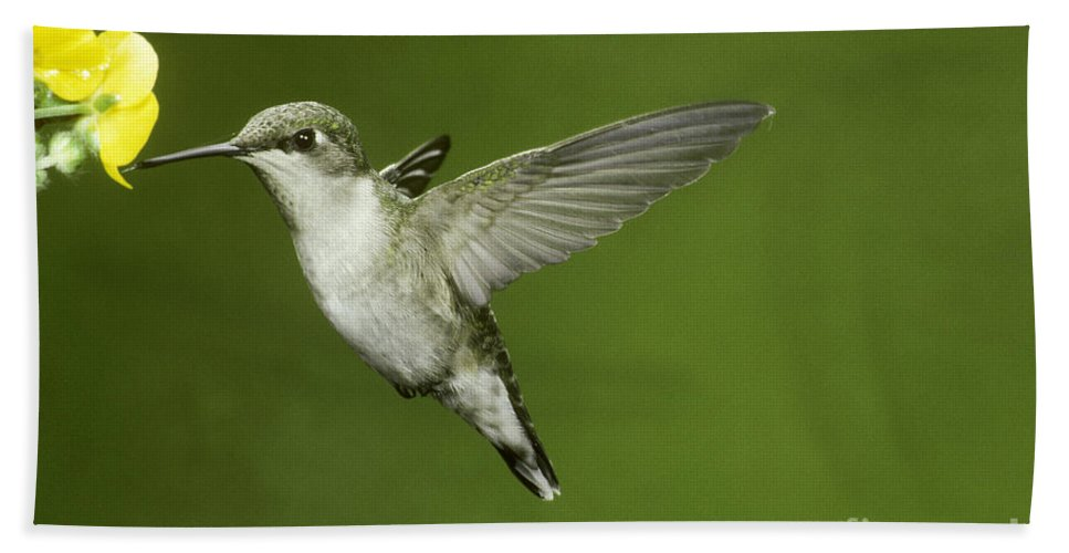 Animal Hand Towel featuring the photograph Ruby-throated Hummingbird At Flower by Anthony Mercieca