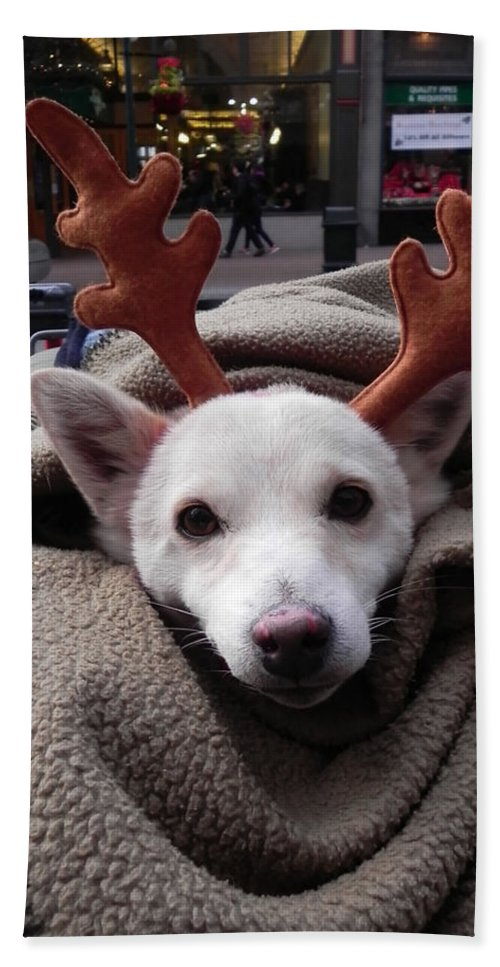 Dog Hand Towel featuring the photograph Rudolph by Cheryl Hoyle
