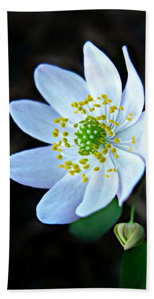 Anemonella Thalictroides Hand Towel featuring the photograph Rue Anemone by William Tanneberger