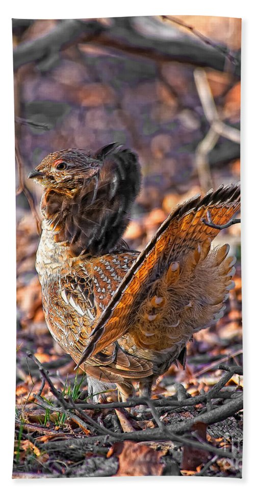 Ruffed Grouse Bath Sheet featuring the photograph Ruffed Grouse Side Strut by Timothy Flanigan