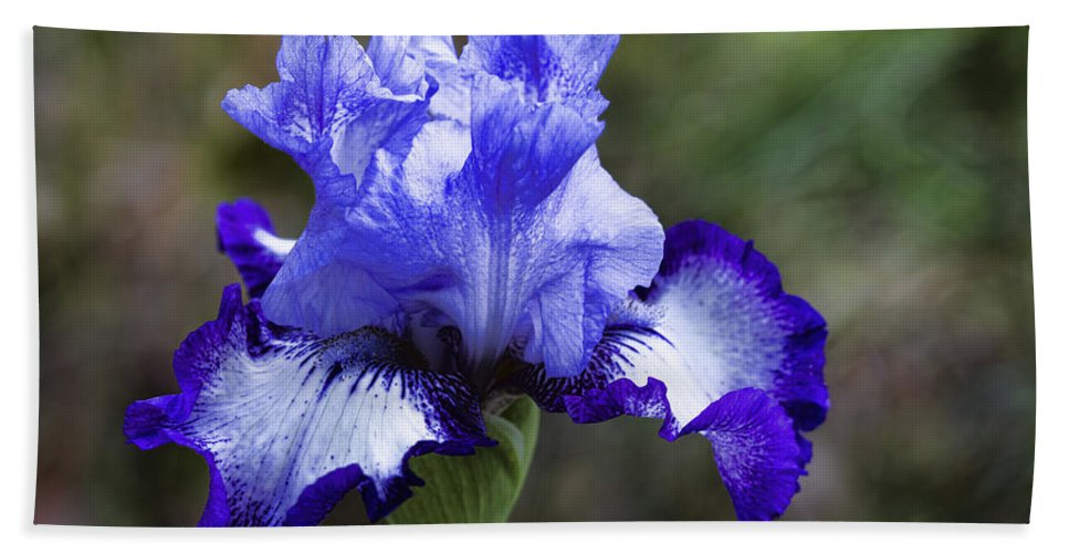 Iris Bath Sheet featuring the photograph Ruffles And Fluffles by Kathy Clark