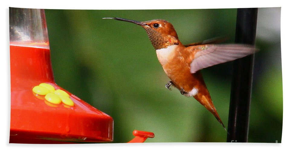 Selasphorus Rufus Bath Sheet featuring the photograph Rufous Hummingbird by Barbara Bowen