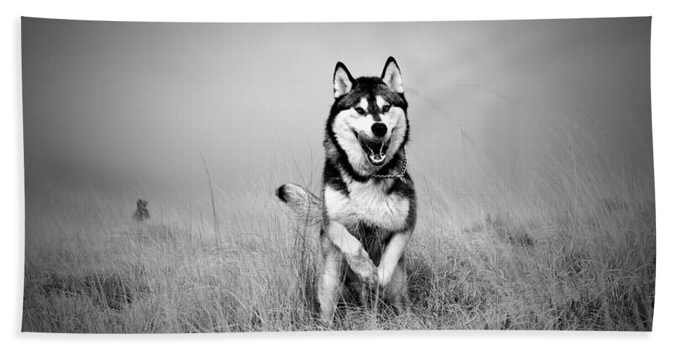 Action Bath Sheet featuring the photograph Running Wolf by Mike Taylor