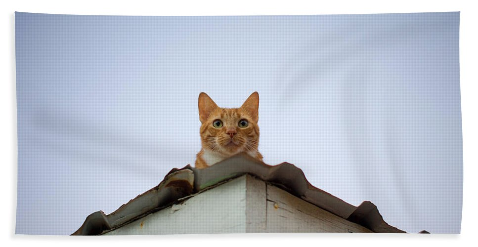 Cat Bath Sheet featuring the photograph Rusty The Cat by Ferry Zievinger